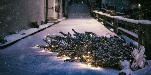 Weihnachtsbaum_Entsorgung - Foto: PIXABAY