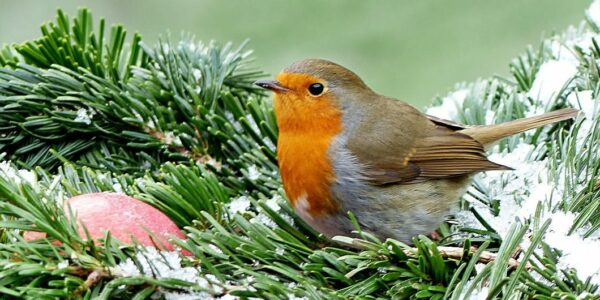 Stunde der Wintervögel - Foto: PIXABAY