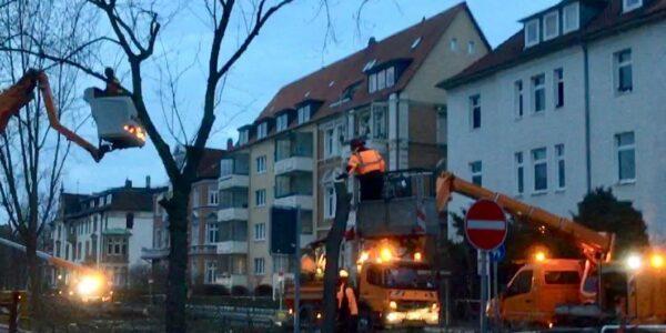 Baumfällarbeiten Jasperallee - Foto: Red.