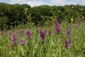 Orchideen - Foto: BUND Braunschweig