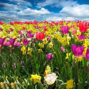 Frühlingserwachen - Foto: pixabay
