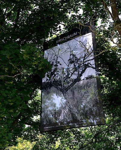 Der Parcours der Narrenbäume - Foto: Reinke, Baumtransparent