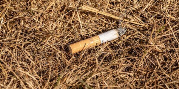 Waldbrandgefahr durch weggeworfene Zigaretten - Foto pixabay