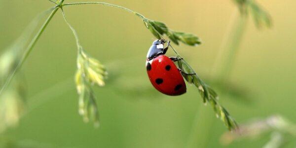 Nabu Aktion Insektenzählen - Foto: Pixabay