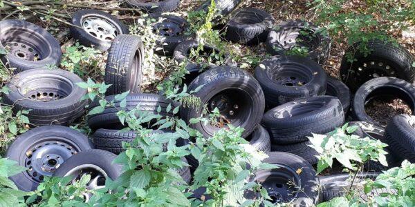 Reifen im Wald - Foto: (c) Nds. Landesforsten